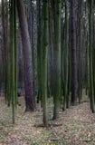 Zeilen der Bäume Lizenzfreie Stockfotos