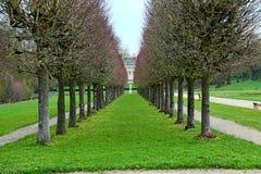 Zeilen der Bäume stockfotografie