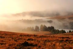 Zeilen der Bäume auf einem nebelhaften Morgen am Sonnenaufgang Stockfoto