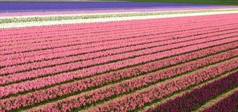 Zeilen der Blumen Stockfotografie