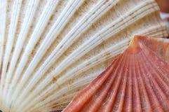 Zeilen des Seashells Lizenzfreie Stockfotografie
