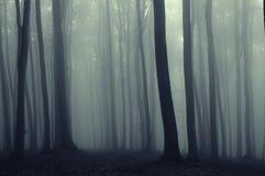 Zeilen im Wald vreated durch Buchebäume Lizenzfreie Stockfotografie