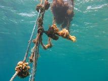 Zeilen mit Korallen im freien blauen Meer Stockfoto