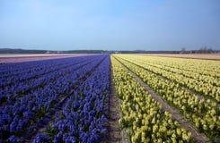 Zeilen und Blumen Lizenzfreie Stockfotos
