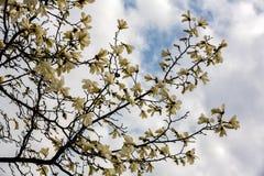 Zeit der Blumen im Frühjahr Stockfotos