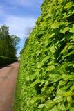 Zeit der Gartenansicht im Frühjahr Lizenzfreie Stockbilder