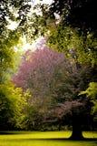 Zeit des Parks im Frühjahr Lizenzfreie Stockbilder