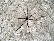 Zeit im Holz Lizenzfreie Stockfotos