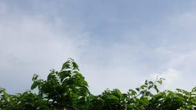 Zeitlaborwolkenbewegen stock footage