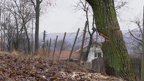 Zeitlupe des Fällens eines Baums stock footage