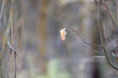 Zeitlupe geschossen vom hellen Schnee, der drau?en f?llt Blo?er Baum mit dem einzigen gelben Blatt verlie?en und Wassertropfen au lizenzfreie stockfotos