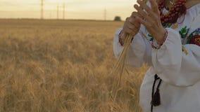 Zeitlupe, Nahaufnahme, Frau im nationalen Kostüm hält in den Händen einige Weizen-Ährchen auf dem Feld stock footage
