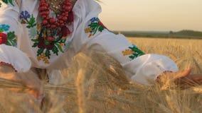 Zeitlupe, Nahaufnahme, Frau im nationalen Kostüm hält Hände auf wachsenden Weizen-Sprösslingen auf dem Feld stock video footage