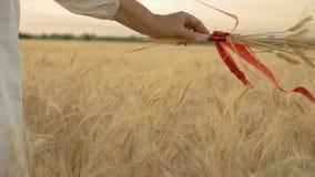 Zeitlupe, Nahaufnahme, Frau ` s Hand hält Weizen-Spitzen gesprungen durch rotes Band und hält über Weizen-Feld stock video footage
