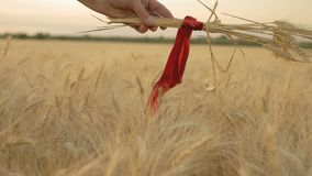 Zeitlupe, Nahaufnahme, Hand einer Frau mit den Weizen-Spitzen gesprungen durch rotes Band über Weizen-Feld stock video footage