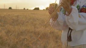 Zeitlupe, Nahaufnahme, Schönheit in einem nationalen Kostüm auf dem Weizen-Feld zerreißt Weizen-Spitze und setzte sie in die Hand stock video footage