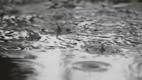 Zeitlupe-Regen - 120 Fps stock video footage
