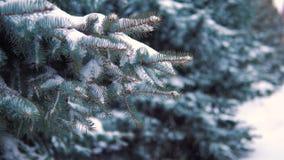 Zeitlupe, Schlaf fällt in einen schneebedeckten Winterpark auf Bäumen stock footage