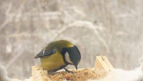 Zeitlupe-Vögel essen im Winter in der Abflussrinne stock video