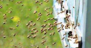 Zeitlupe von Honey Bee-Fliegen um Bienenstock mit unscharfem Hintergrund beekeeping stock footage