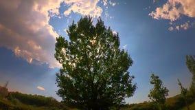 Zeitlupebaum, der mit Sonne hinten sich bewegt stock video