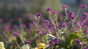 Zeitlupegesamtlänge des bunten Stadtparks der Blumen im Frühjahr, unscharfe Leute, die in den Hintergrund gehen stock video footage