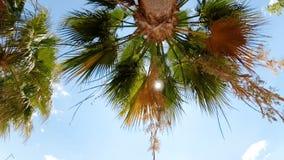 Zeitlupegesamtlänge von den Palmblättern, die windigen sonnigen Tag am Strand weitergehen stock footage