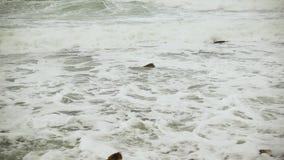Zeitlupeschaum bewegt auf den Steinstrand wellenartig stock footage