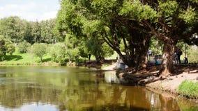 Zeitspanne auf dem Ufer des Teichs stock footage