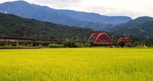 Zeitspanne der ländlichen Landschaft mit goldenem Bauernhof des ungeschälten Reises und roter Brücke in Hualien, Taiwan, Asien stock footage