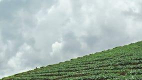 Zeitspanne des terassenförmig angelegten Gemüsefeldes, Thailand Lizenzfreie Stockfotografie