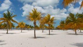 Zeitspanne-Palmen beim Sirena setzen auf den Strand stock video footage