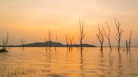 Zeitspanne-Schattenbild des trockenen Baums im Wasser an Knall Phra-Reservoir im Sonnenuntergang, Sriracha-Bezirk, Chonburi, Thai stock video