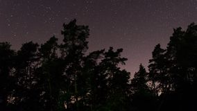 Zeitspanne von Bäumen des Waldes und Sternen im nächtlichen Himmel stock footage