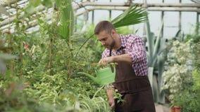 Zekere mannelijke tuinman het water geven installaties bij serre met pot De aantrekkelijke jonge mens geniet van zijn baan in tui stock footage