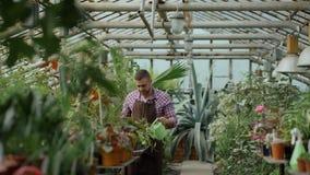 Zekere mannelijke tuinman het water geven installaties bij serre met pot De aantrekkelijke jonge mens geniet van zijn baan in tui stock videobeelden