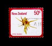 Zelandica di Poirieria del Murex, serie coperti di spine delle lumache e delle coperture, circa 1978 Fotografia Stock