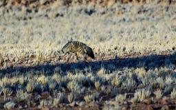 Zeldzaam Aardvarken in de wildernis royalty-vrije stock fotografie