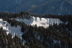 Zeldzaam bos met sparren op de snow-covered helling in de bergen Royalty-vrije Stock Afbeeldingen