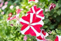 Zeldzame bloemen Royalty-vrije Stock Afbeelding