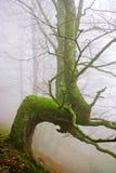 Zeldzame boom in de mist Royalty-vrije Stock Fotografie