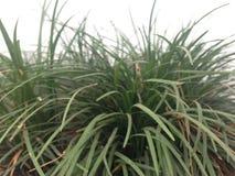 Zeldzame grassen royalty-vrije stock afbeeldingen