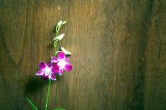 Zeldzame Orchidee Stock Foto's