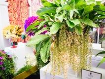 Zeldzame orchild in de orchideeën van toonbeeldbangkok Stock Foto