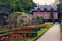 Zeldzame spanningen van tulpen in het park van de Kleinigheid, Parijs Stock Afbeeldingen