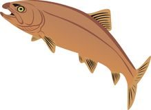 Zeldzame vissen Royalty-vrije Stock Foto's