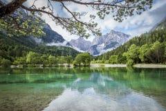 Zelenci damm nära Kranjska Gora i den Triglav nationalparken royaltyfri bild