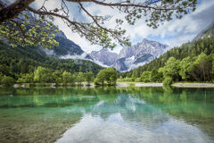 Zelenci pond near Kranjska Gora in Triglav National Park Royalty Free Stock Image