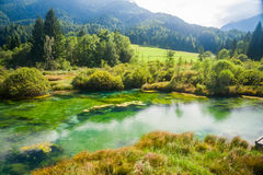 Zelenci - Sava river spring in forest Stock Photography