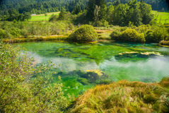Zelenci - Sava river spring in forest Stock Photos